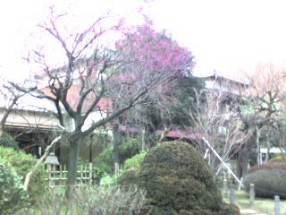 新江戸川公園1